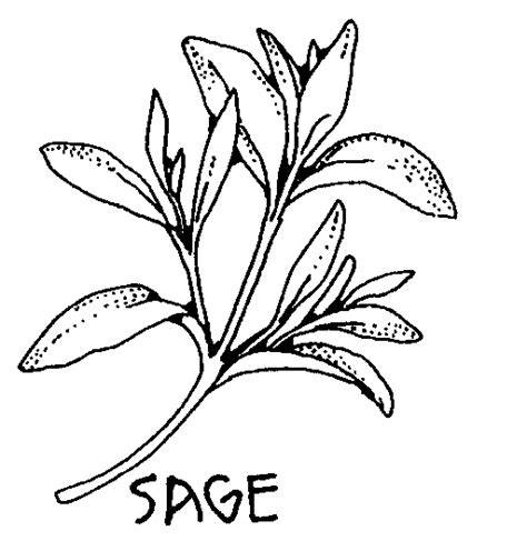 herbs coloring pages
