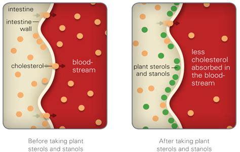 plant sterols lower blood cholesterol levels plant sterols can help lower your cholesterol naturally