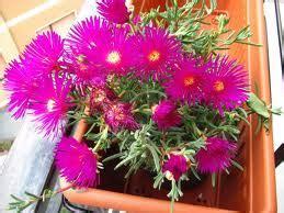 fiori recisi nomi i fiori pi 249 belli e rari scoprili con noi