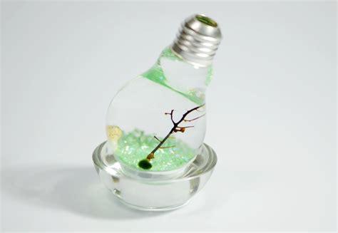 green marimo moss ball light bulb terrariums