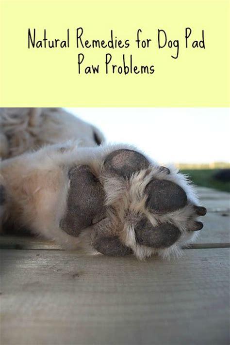 dog paw pad problems paws