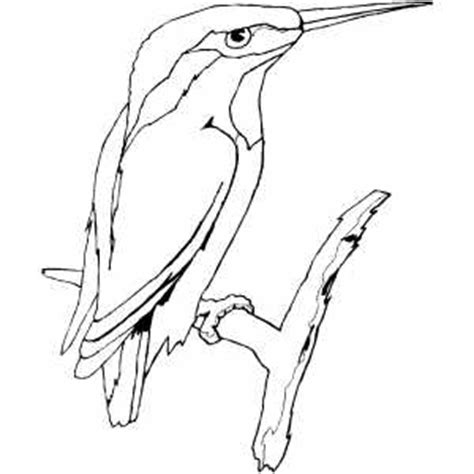 kingfisher coloring pages kingfisher on branch coloring sheet