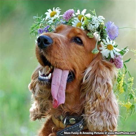 dogs with flowers with flowers www imgkid the image kid has it