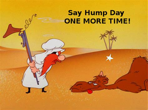 hump day funny camel yosemite sam the digest