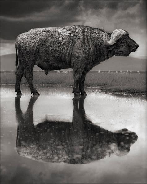 libro across the ravaged land el lago que convierte en piedra a los animales