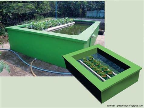 membuat hidroponik dan kolam ikan budidaya ikan dan tanaman di rumah dengan aquaponik