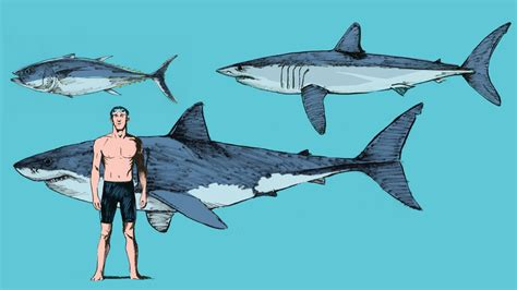 Shark In The what makes mako sharks the fastest sharks in the
