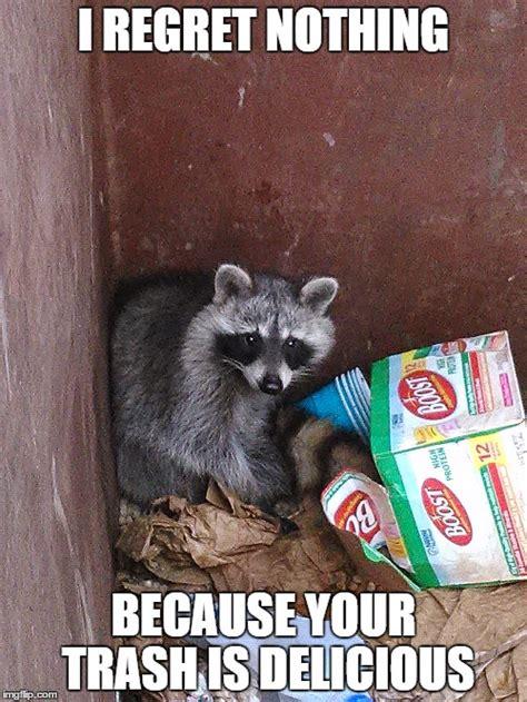 Meme Generator Raccoon - raccoon in garbage imgflip