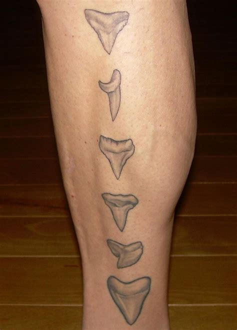 shark tooth tattoo best 20 shark tooth ideas on