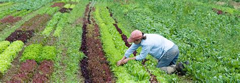 succession planting principles practices methods