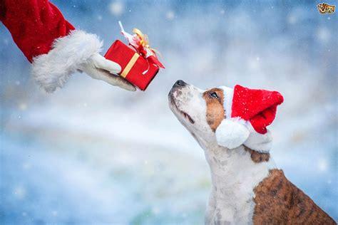 puppy present ten brilliant present ideas for your pets4homes