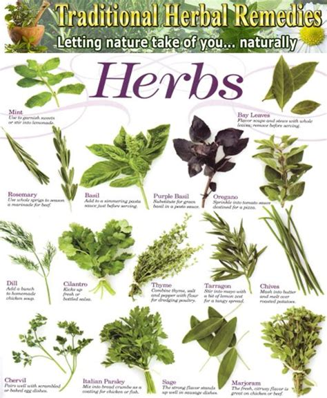 herb grower s sheet list medicinal plants herbal medicinal plants plant spirit medicine medicinal