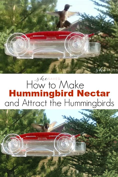 how to make hummingbird nectar and attract hummingbirds to