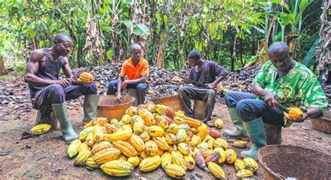 certificato commercio cacao ghanese certificato commercio equosolidale