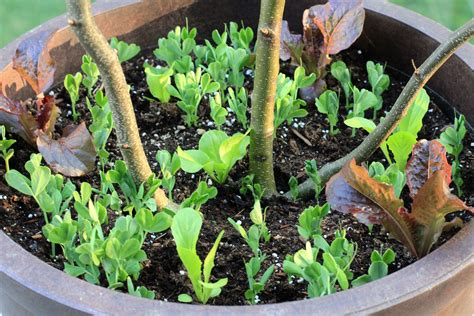 starting a container garden container gardening ideas starting a garden in a container