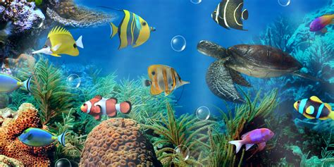 live wallpaper for pc touch screen aquarium live wallpaper android apps on google play