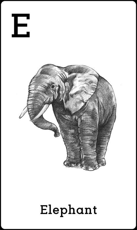 Sepatu Bayi Prewalker Elephant 1 harga jual kartu edukasi animal 4d murah di pricepedia org
