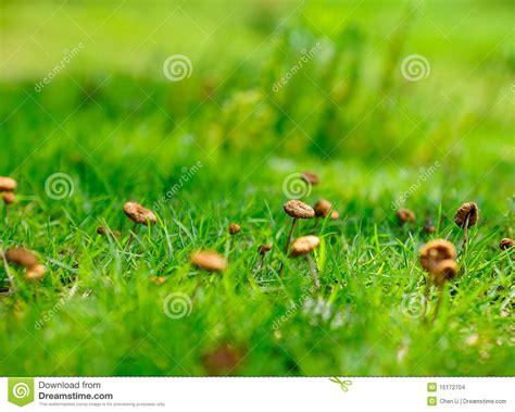 wann hã rt auf zu wachsen kleine pilze stockbilder bild 15172704
