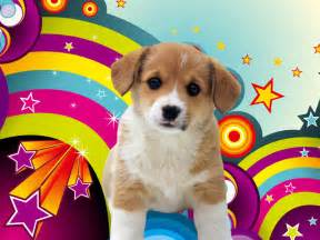 puppy wallpaper puppies wallpapers download wallpaper hd and background