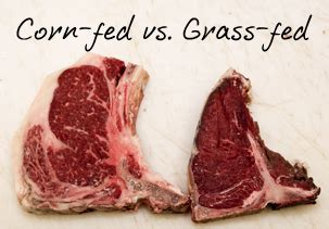 Hormon Nature Stek the on grass fed beef better than grain fed beef