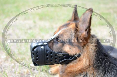 rottweiler breathing heavy k9 leather muzzle for dogs m55 1070 leather k9 muzzle dondi plus german