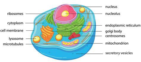 printable animal cell animal cell kids biology