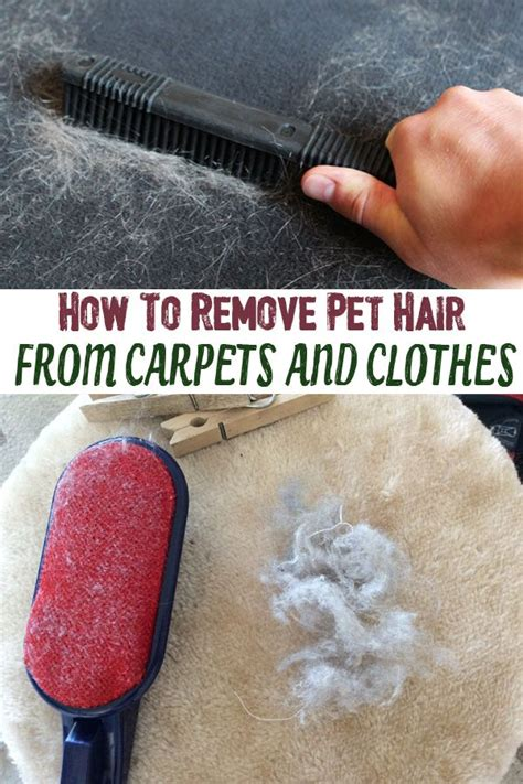 How To Remove Pet Hair From 1000 ideas about remove pet hair on urine