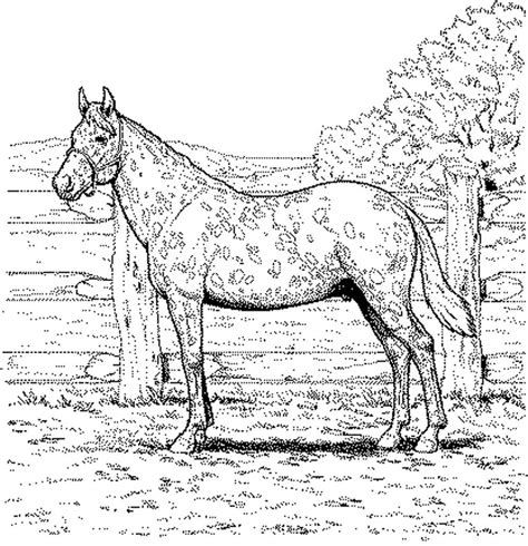 penguin coloring pages  adults google search horse