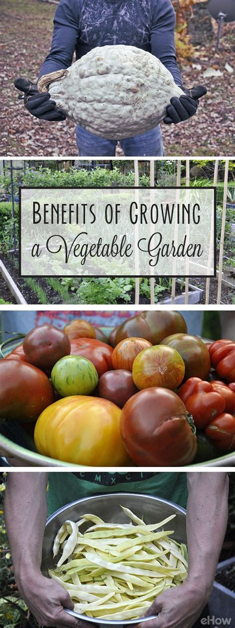 Benefits Of Growing A Vegetable Garden Gardens The O Benefits Of Vegetable Gardening