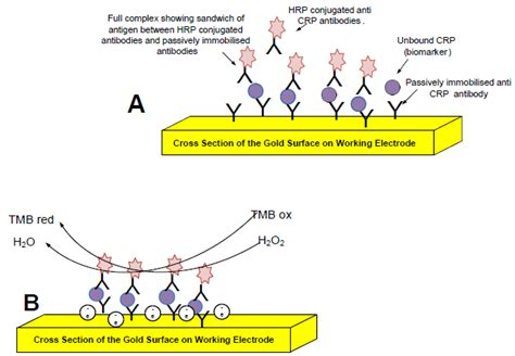 c protein inflammation biosensors free text detection of the