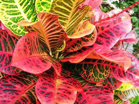 Jual Hidrogel Di Denpasar jual tanaman eksotis tanamanbaru