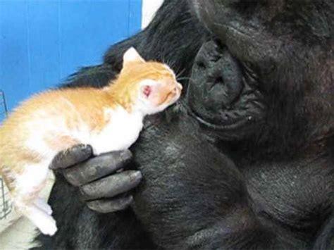 Koko Lis awww animal friendships