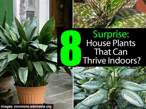 indoor house plant 8 house plants that can thrive indoors