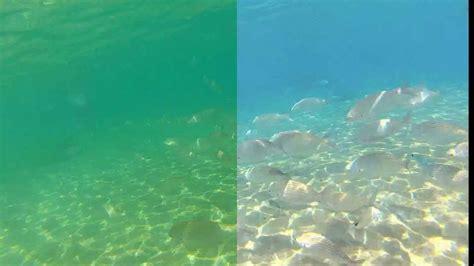 Gopro Hero 2 Dive Housing Sony Vegas Underwater Video