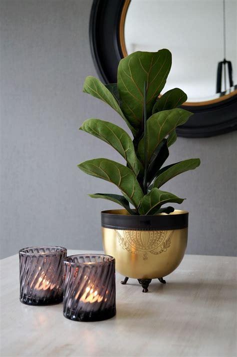 unique house plants f 246 reg 229 ende artikel for the home pinterest fiddle fig