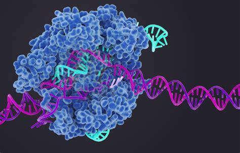 crispr gene editing fervor pushes  biotech