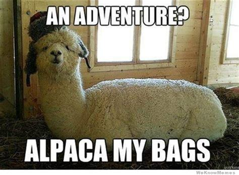 Alpaca Memes - alpaca meme www pixshark com images galleries with a bite
