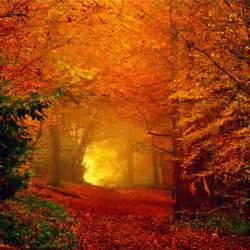 colors of fall autumn pictures designinstance
