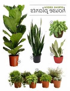 5 hardy hard to kill houseplants for apartments with low hardy house plants photos