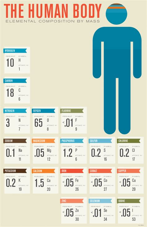 infographics human body human body composition visual ly