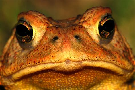 climate change s surprising effect shrinking climate change and animals frogs toads and newts