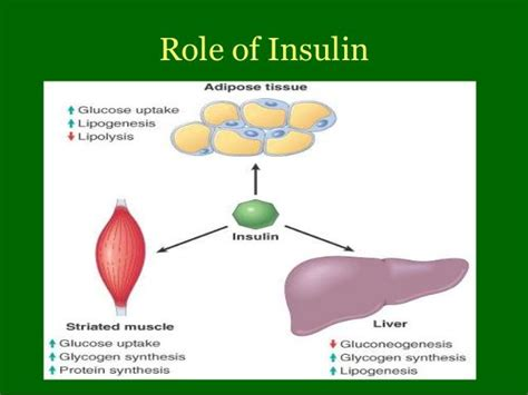insulin function types dosages reaction diabetes