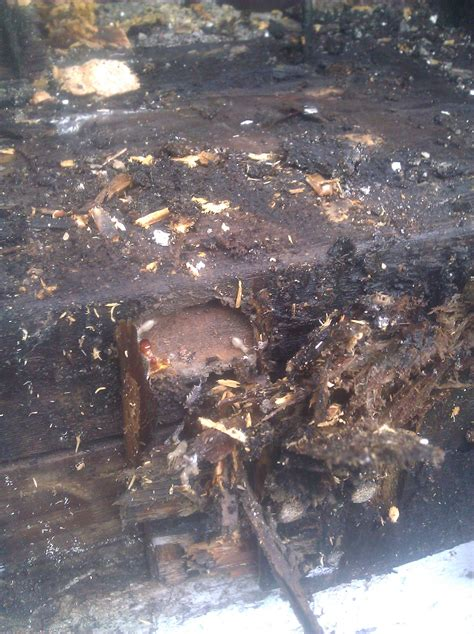 termites in bathroom bathroom remodeling before after and during photos