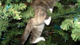 25 cats in on and under christmas trees mnn mother