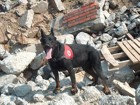 puppy finder rescue search and rescue dogs animal literature