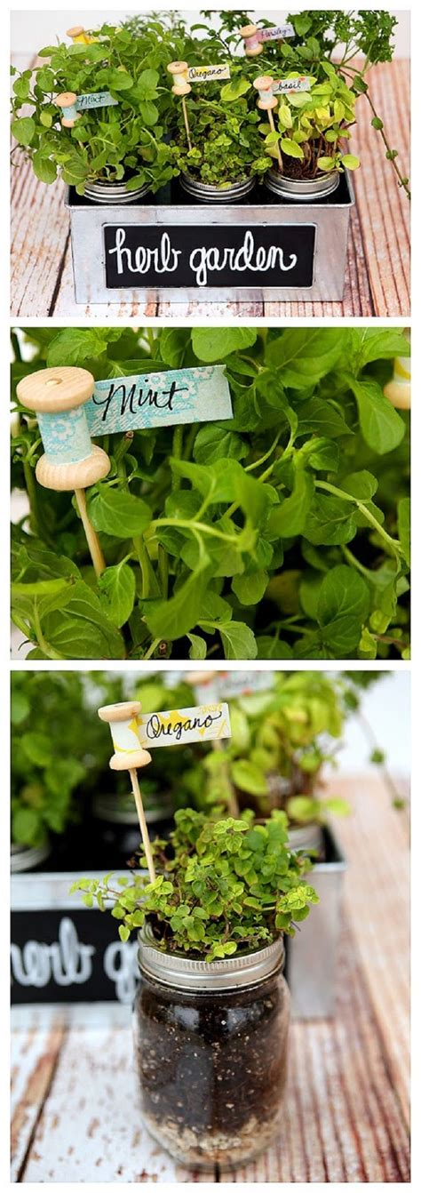 smart herb garden provides fresh herbs at home using fresh herbs gives a special taste to every meal
