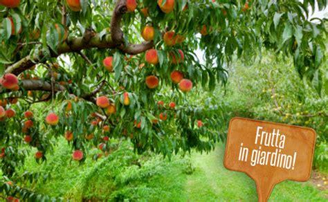 alberi da frutto  giardini  piante  chi ha poco