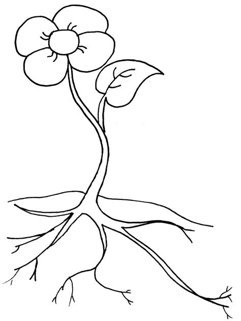 coloring page parts of a flower parts of a plant activity sheet