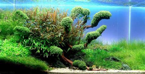 aquarium size wdhcm