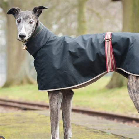 pattern for greyhound dog coat buster in our lovely long dog greyhound coat pet sewing